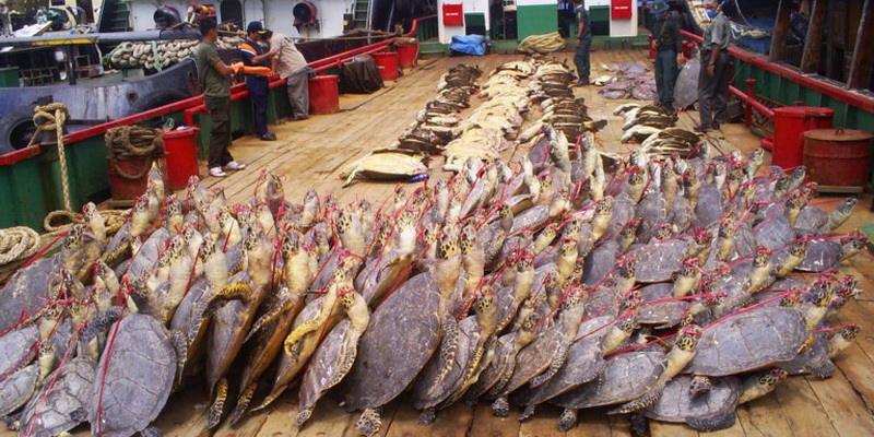 Seizure of hundreds of turtles that were going to be used as decoration (© Turtle Foundation)