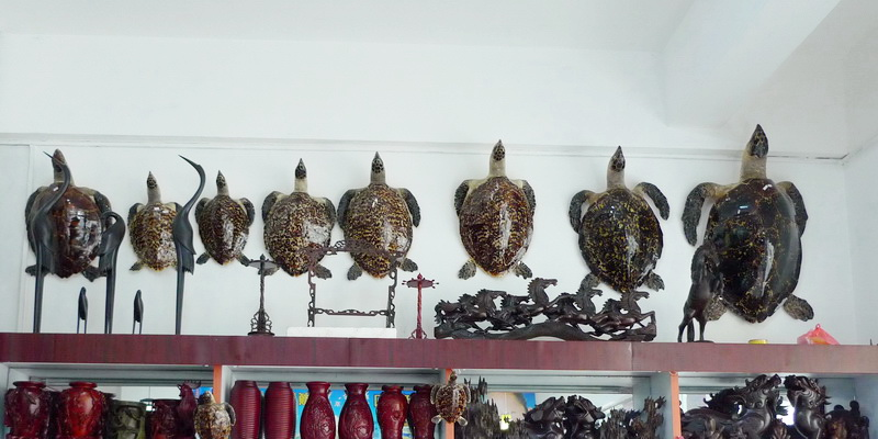 Turtles openly for sale in a shop (© Xu Ling / TRAFFIC)
